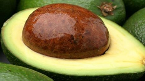 What's the deal with eating avocado seeds? | Fox News | Science, Technology, and Current Futurism | Scoop.it