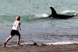 Raglan Harbour's killer views - Waikato Times | #Orca #Avenger Loki Mars | Scoop.it