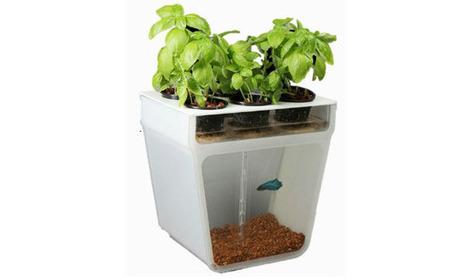12 sistemi di coltura idroponica | fiori e piante, curiosità e notizie | Scoop.it