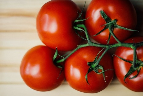 Grow The Heartiest Tomatoes With These Organic Tips | Liberty Revolution | Scoop.it