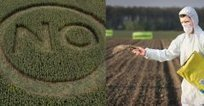 Turquie : Des professionnels l'Alimentation retirent leur demande d'autorisation pour importer 29 différentes sortes d'organismes génétiquement modifiés- Turquie Européenne   Abeilles, intoxications et informations   Scoop.it