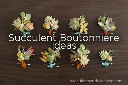 Succulent Boutonniere Ideas for Your DIY Wedding - Succulents and Sunshine | Natural Soil Nutrients | Scoop.it