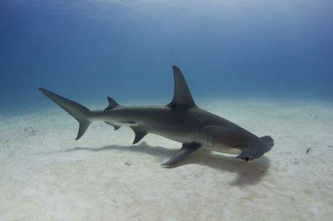 World Ocean Summit Report 2014 | GarryRogers Biosphere News | Scoop.it