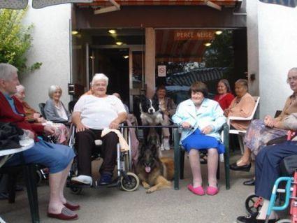 Hôpital Mulhouse - Chiens visiteurs au service des personnes fragilisées - Education canine en Alsace - le blog letoiledesbergers.com | Educateur canin en Alsace - Etoile des bergers | Scoop.it