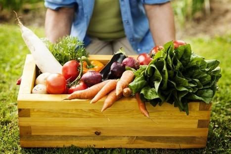 Alimentos transgénicos más naturales | Educacion, ecologia y TIC | Scoop.it