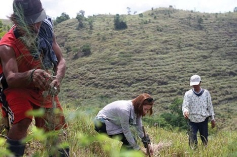 "PHL's greening program, a global model for inclusive reforestation (""it's sad that corruption killed it"") 