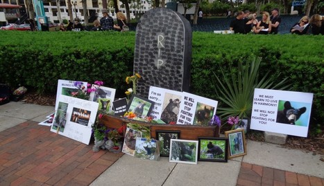 Heartbroken People Honor The 295 Bears Killed In Just 2 Days | Nature Animals humankind | Scoop.it