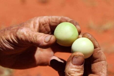 Bush tucker pioneer wants Alice Springs to be the native food capital of Australia | Australian Plants on the Web | Scoop.it