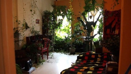 VIDEO INTERVIEW: Model Summer Rayne Oakes Turns Her Brooklyn Apartment into a Greenhouse Filled with 200+ Plants | Inhabitat New York City | Sustainability MOOC | Scoop.it