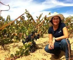 Chile's new wine from the earth | Wine website, Wine magazine...What's Hot Today on Wine Blogs? | Scoop.it