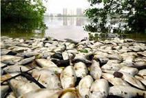 Poissons. Evitez les espèces en voie de disparition | Protection de la biodiversité | Scoop.it