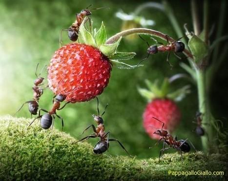 Vita delle formiche (28 foto) - PappagalloGiallo.com   ANIMALI   Scoop.it