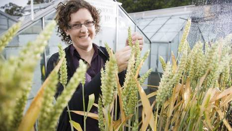 Agriculture project crops up   Harvest news   Scoop.it