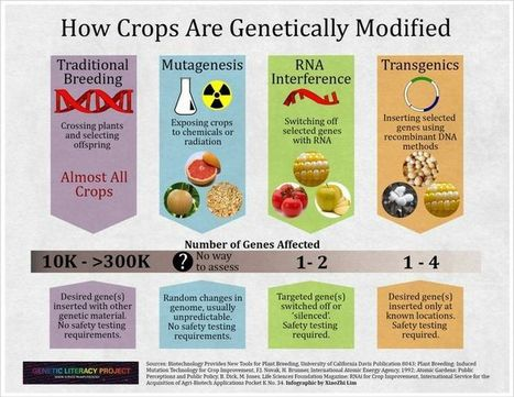 GMO Basics | Food security | Scoop.it