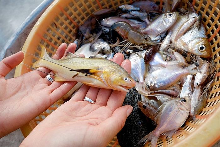(EN) (NL) (ES) (FR) - Fish List | Christine Scheel & Sjoerd Mullender | Glossarissimo! | Scoop.it