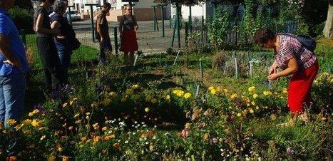 Association Vert le Jardin : 54 jardins partagés cultivent les liens entre personnes, la valorisation et l'estime de soi au Pays de Brest | Imagination For People | mes tactiques en français | Scoop.it