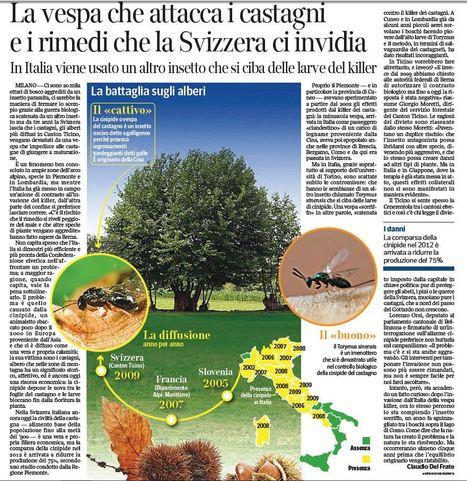 Più bravi della Svizzera a «salvare» le castagne - ma non all'Elba | Gazzetta Elbana | Scoop.it