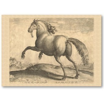 Elegant Equestrian Stable Spanish Horse Business Cards | Designs by ANTIQUE IMAGES | Scoop.it