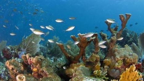 Descubren peces que se adaptan al cambio climático - Martí Noticias | Agua | Scoop.it