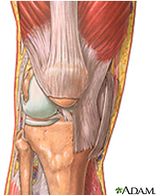 Knee Injuries and Disorders: MedlinePlus | Medic-e-learning case 1 (Knee) | Scoop.it