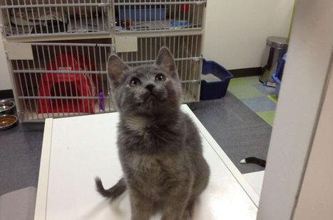 Winnipeg shelter holds 'sleep out' for homeless animals - CBC.ca   Animal Shelter voulenteer   Scoop.it