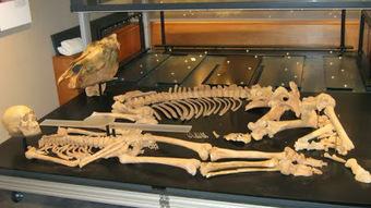 Anglo-Saxon warrior & horse to go on display at Mildenhall Museum | Histoire et archéologie des Celtes, Germains et peuples du Nord | Scoop.it