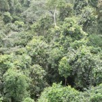 Ten African countries unite to protect rainforests   Earthzine   Southern Hemisphere   Scoop.it