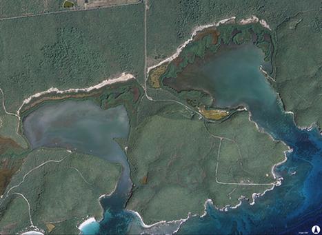 Corriente Verde | La preservación de las bahías bioluminiscencias en Puerto Rico | Scoop.it