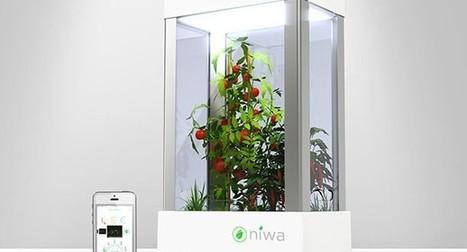 Niwa, un potager connecté d'intérieur   Jardin connecté   Articles Objets Connectés   Scoop.it