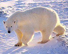 Russian Arctic - new national park next door to North Pole | Inuit Nunangat Stories | Scoop.it