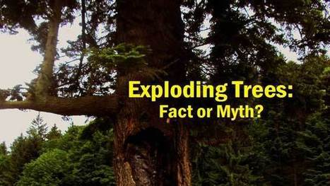 Exploding Trees: Fact or Myth? | Odd Random Thoughts | Scoop.it