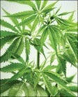 Cannabis and psychosis - The Lancet Psychiatry | Probabilistic reasoning, causal inference and statistics | Scoop.it