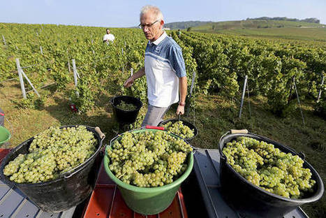 Three Ways to Beat Champagne's Climate-Change Problem | Vitabella Wine Daily Gossip | Scoop.it