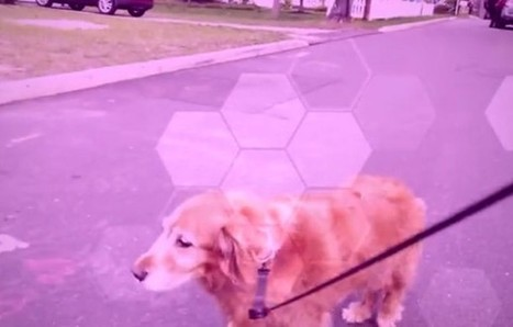 This Man Used a Drone to Walk His Golden Retriever (Video)   Digital-News on Scoop.it today   Scoop.it