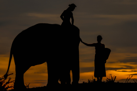 Love me love my elephant .   Beautiful Photography   Scoop.it
