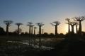 Extraordinaires forêts du monde | Esprit libre | Scoop.it