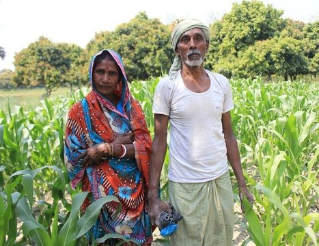 For Farmers in Bihar, A Simple Solution for More Crops | Living Green - Integrated Architecture & Practices | Scoop.it