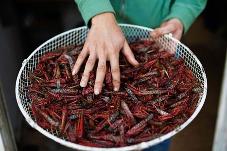 U.N. Urges Eating Insects; 8 Popular Bugs to Try | Eco-Food Innovation | Scoop.it