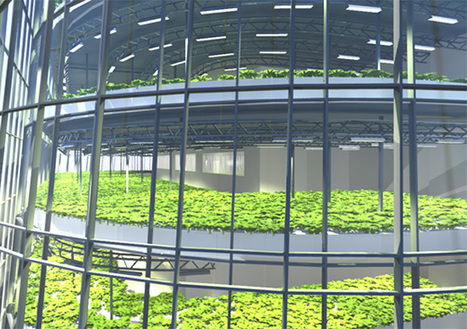 3 Creative Solutions Emerging in Urban Farming - EcoWatch | Aquaponics~Aquaculture~Fish~Food | Scoop.it