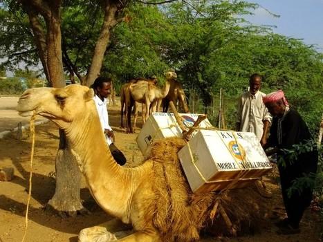 Bibliothècaires du désert, ils baladent leurs livres en yak ou en chameau | Rue89 | Kiosque du monde : A la une | Scoop.it