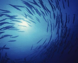 Report/Oceans: Stocking Up: Securing Our Marine Economy | Climate Change, Agriculture & Food Security | Scoop.it