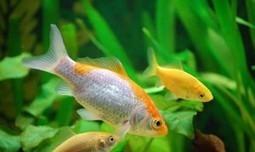 Mi primer acuario: Parte I : TiendAnimal | Acuarios | Scoop.it