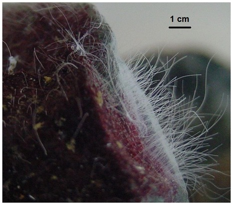 Data from: Microbial life in a fjord: metagenomic analysis of a microbial mat in Chilean Patagonia   Data Science   Scoop.it