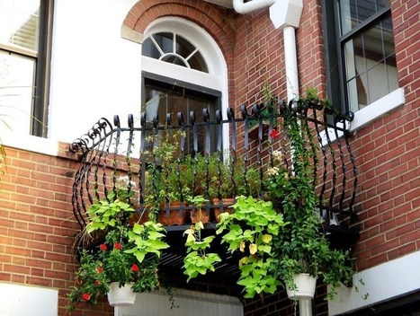 Plants for North Facing (Shady) Balcony Garden | raed albustany | Scoop.it