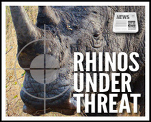 The UN Speaks Out Against Rhino and Elephant Poaching | Kruger & African Wildlife | Scoop.it