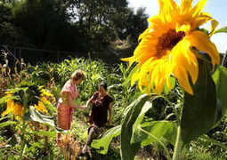 Can gardening cure one's ills? - Local - fresnobee.com | ISO Mental Health & Wellness | Scoop.it
