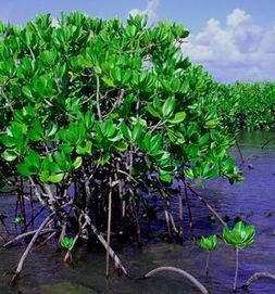 Coral Reef Plants | Common Plant Life of Coral Reef Ecosystems | Ecosystems | Scoop.it