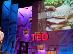 6 ways mushrooms can save the world: Paul Stamets on TED.com | Discover Sigalon Valley - Where the Tags are the Topics | Scoop.it