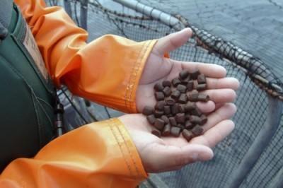 Fish and Soybean Farmers to Shake Hands? - Triple Pundit   Fish Habitat   Scoop.it