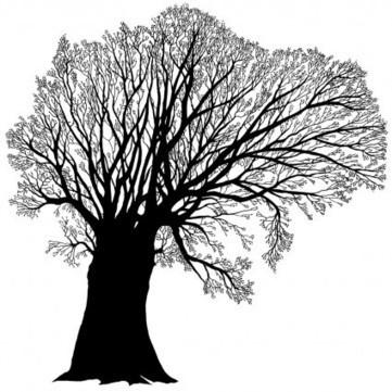 Donnez plus de couleur à votre arbre - MyHeritage.fr - Blog francophone   RoBot généalogie   Scoop.it